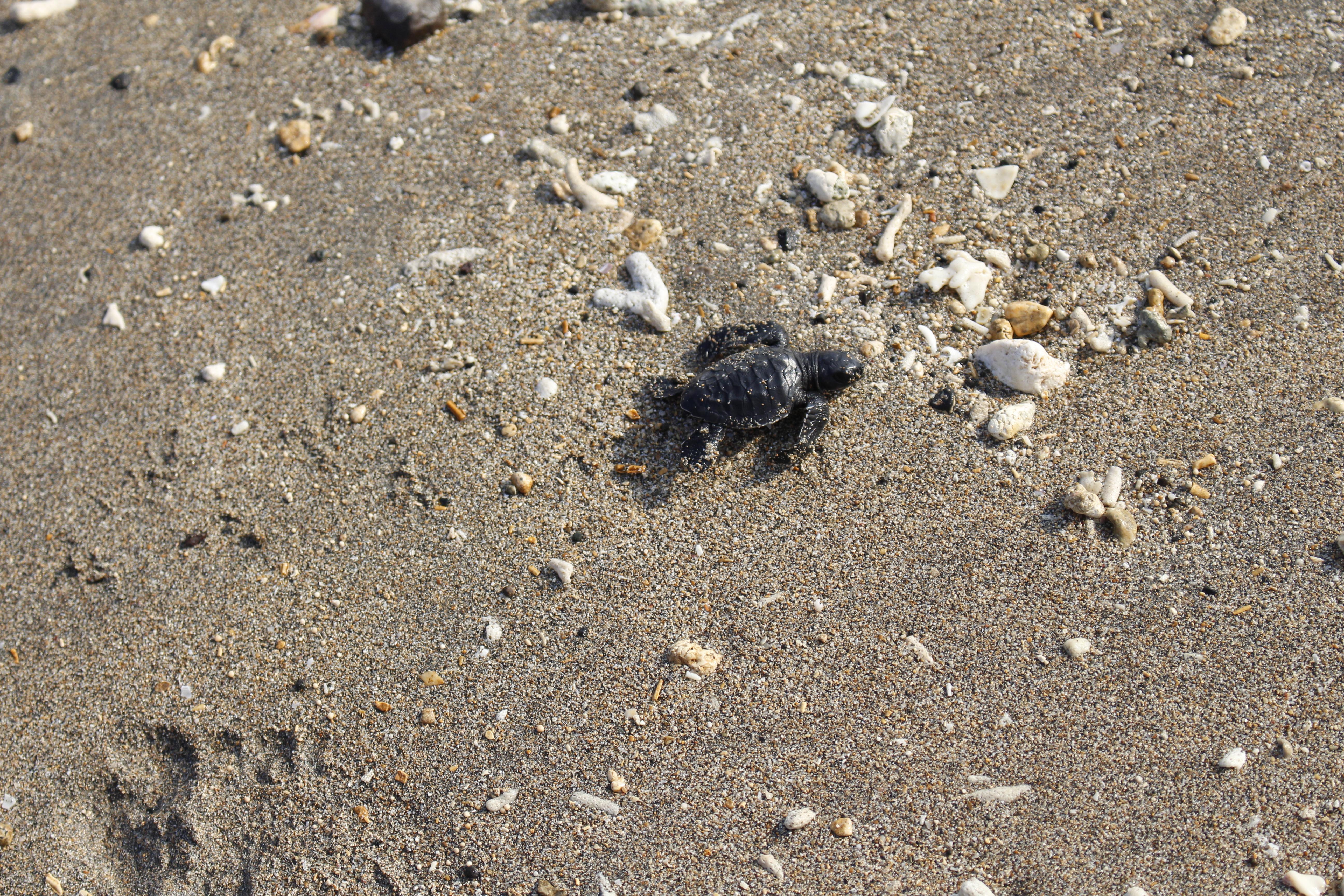 https://highend-traveller.com/baby-turtle-release-at-the-anvaya-beach-resort-bali/